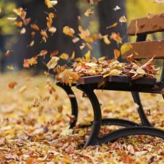podzim_listi