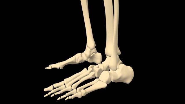 chodidlo kosti